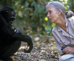 Lessons from Jane Goodall