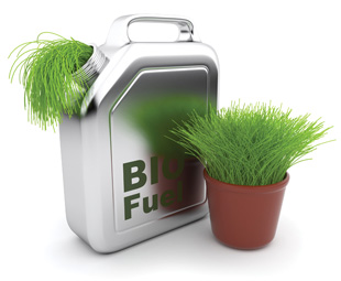 Did you say biofool or biofuel?