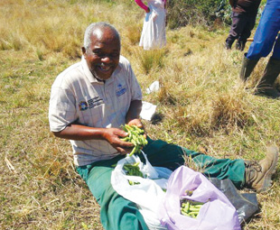 The KuhleKudla Project is helping local farmers in many ways. For example, it teaches them permaculture farming methods and how to make organic composts and sprays.