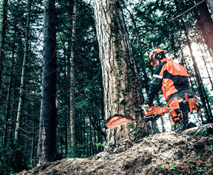 Forestry safety gear