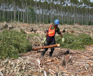 Multiple hazards exist in the logging and forestry sectors; essential PPE must not be neglected.