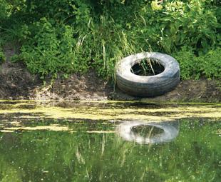 Environmental insurance: ensuring our future