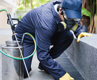 Sanitech increases pest control services